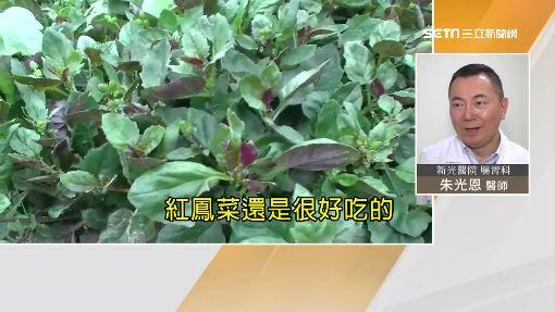 獨/驚!紅鳳菜有毒? 吃多肝硬化甚至致癌?
