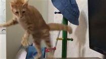 又可愛又好笑!好奇小橘貓拍打圓梳 被自己嚇到彈飛(圖/翻攝自臉書社團《貓咪也瘋狂俱樂部》