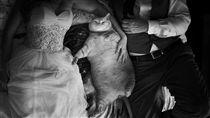 肥貓拍婚紗照(圖/翻攝自臉書Symba the tubby tabby)