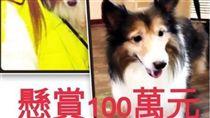 女網友愛犬走失,懸賞一百萬(圖/翻攝自Alexia Victoria Rankin臉書)