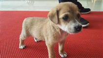 警方接獲報案捕抓惡犬,結果是一隻剛出生不久的超萌幼犬。(圖/翻攝自馬鞍山當塗公安在線微博)
