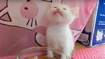 原來這就是水!小貓第一次喝水表情超美味 萌翻網友(圖/翻攝自《Spot the Kitty STK》YouTube)