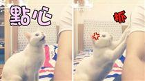 貓,寵物,喵星人,毛小孩,毛寶貝,豆漿,漿爸,肚子餓 (圖/翻攝自YouTube)