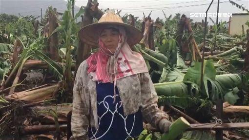 尼莎颱風,強陣風,電線桿,停電,香蕉,蕉農 ID-991042