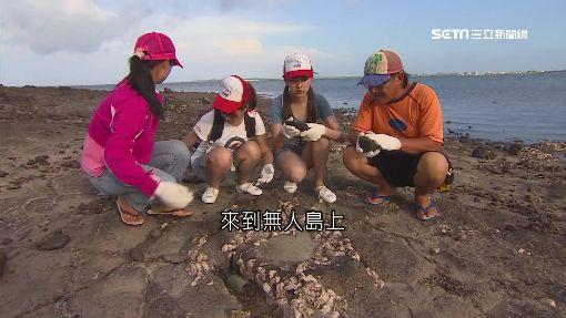澎湖無人島牡蠣肥美 享受天然原味,卡加牡蠣島,海鮮 ID-991692