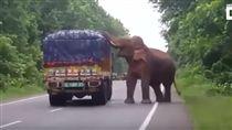 印度,西孟加拉邦,野象,旱災,攔截,飢餓,印度象,坦米爾納杜邦