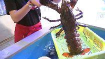 藍龍蝦蒸鍋1800