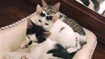 浪貓帶著小孩入住網友家。(圖/翻攝自三小喵的生活日誌臉書)