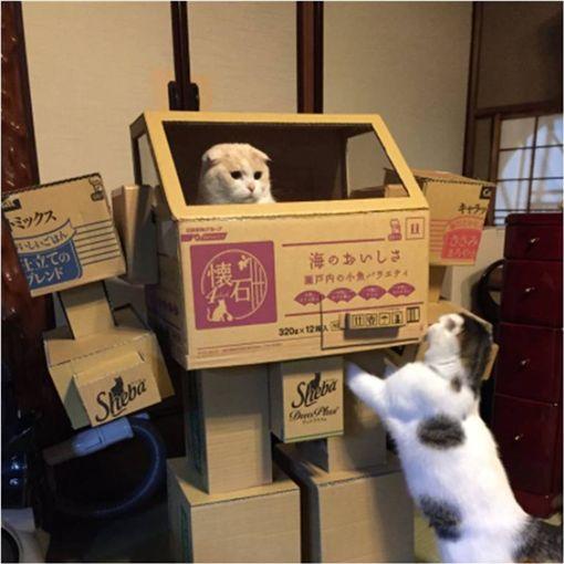 機器人,紙箱,貓咪,喵星人 圖/翻攝自推特