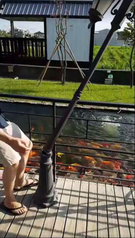 弟弟餵魚撞路燈 人沒事但燈倒了,鐵頭功圖/翻攝自爆料公社YouTube