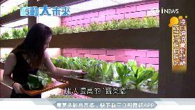 IT老兵當現代農夫 地底蓋植物工廠