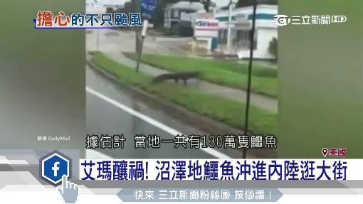 最強颶風襲美國! 鱷魚內陸逛大街