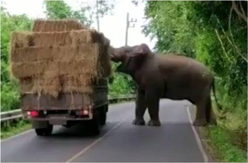 泰國,大象,卡車,過馬路,乾草,玩耍 圖/翻攝自YouTube ID-1054593