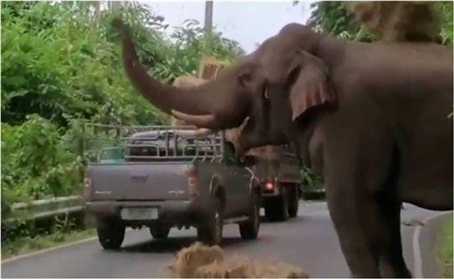 泰國,大象,卡車,過馬路,乾草,玩耍 圖/翻攝自YouTube ID-1054594