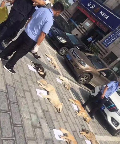 餐廳老闆獵捕路邊小狗煮狗肉火鍋。(圖/翻攝自楚天都市報)