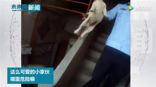 安徽,小狗,圖/YouTube