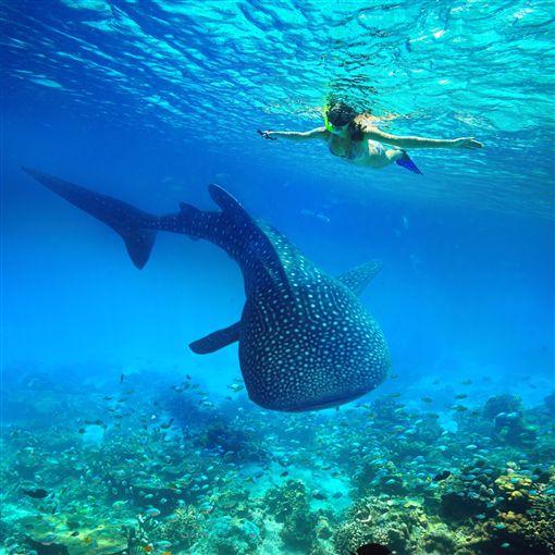 潛進菲律賓宿霧與鯨鯊同游 薄荷島尋找眼鏡猴蹤跡