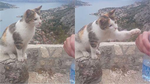 貓咪口渴討水喝。(合成圖/翻攝自korochkin.denisInstagram)