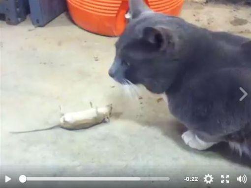 湯姆貓咪與傑利鼠,卡通,老鼠,演戲技巧,迪士尼,好萊塢(圖/翻攝自社群網站)https://www.facebook.com/NTDFunnyLife/videos/1986354118320746/