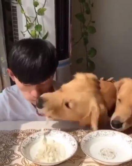 寵物,狗狗,吃麵,比賽,主人,搶食,犬,貪吃(圖/翻攝自暖暖的阿金臉書)