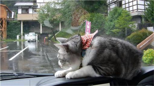 貓咪,喵星人,雨刷,惡作劇,閃躲,汽車 圖/翻攝自YouTube