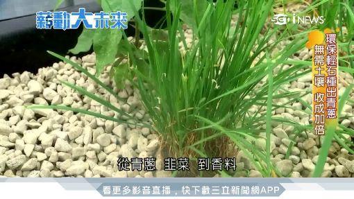 低碳綠金革命夯 無須土壤式種植