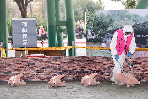 北市非洲豬瘟防疫演習 模擬撲殺豬隻(1)「台北市因應非洲豬瘟防疫應變作為模擬演習」31日在台北花博公園舉行,演習現場模擬養豬場內發生疑似非洲豬瘟,工作人員以電擊方式撲殺豬隻。中央社記者吳翊寧攝 108年1月31日