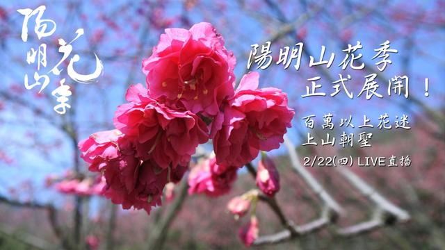 陽明山花季正式展開!百萬以上花迷上山朝聖