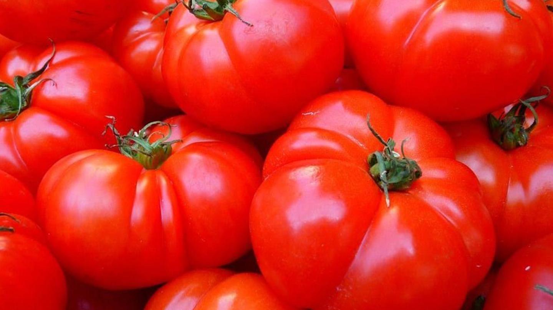植物被吃也會哭? 研究:番茄每小時低鳴哭泣25聲
