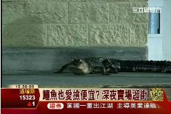 鱷魚逛賣場1100