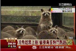 浣熊是半仙1600