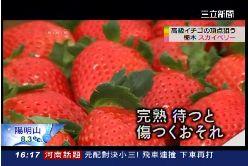 日草莓大戰1600