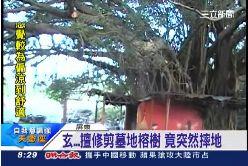 p砍墓樹摔死1800