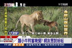 最溫柔母獅1100