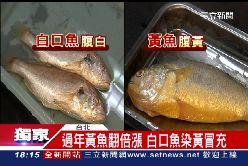 白腹假黃魚1800