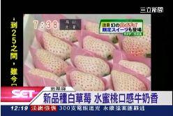 初戀白草莓1200
