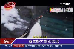 企鵝吃剉冰1600