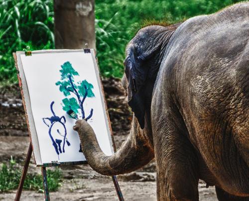 就是這隻象