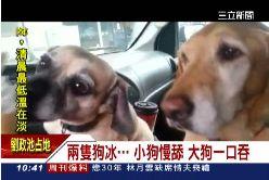 (新聞網)狗狗冰淇淋