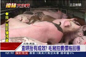 豬囤積開鍘1200