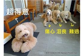 台灣之光!狗狗飯前禱告爆紅到國外