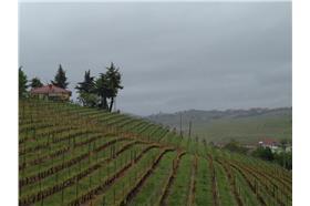 義大利Piedmont酒莊慢活之旅 回歸原始的生活態度(照片來源:名家鄭怡華)