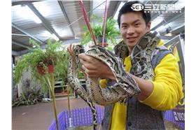 在台灣的故事 蛇