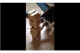 貓貓,翻攝自臉書影片