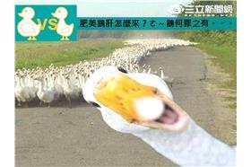 鵝肝殘忍製作過程