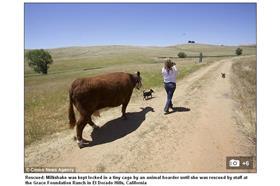 母牛-每日郵報