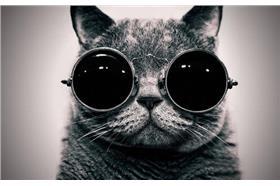 貓-卡卡洛普-取自網路