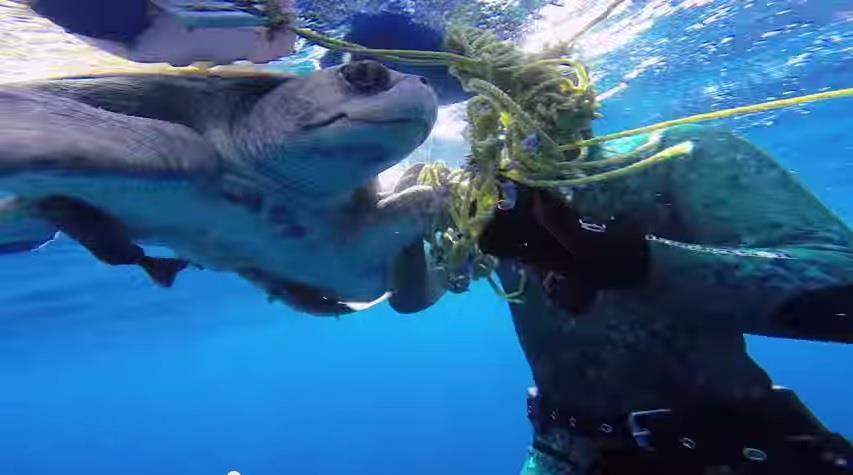 海龜/youtube