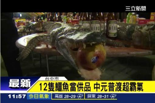 霸氣!12隻鱷魚當供品普渡好兄弟