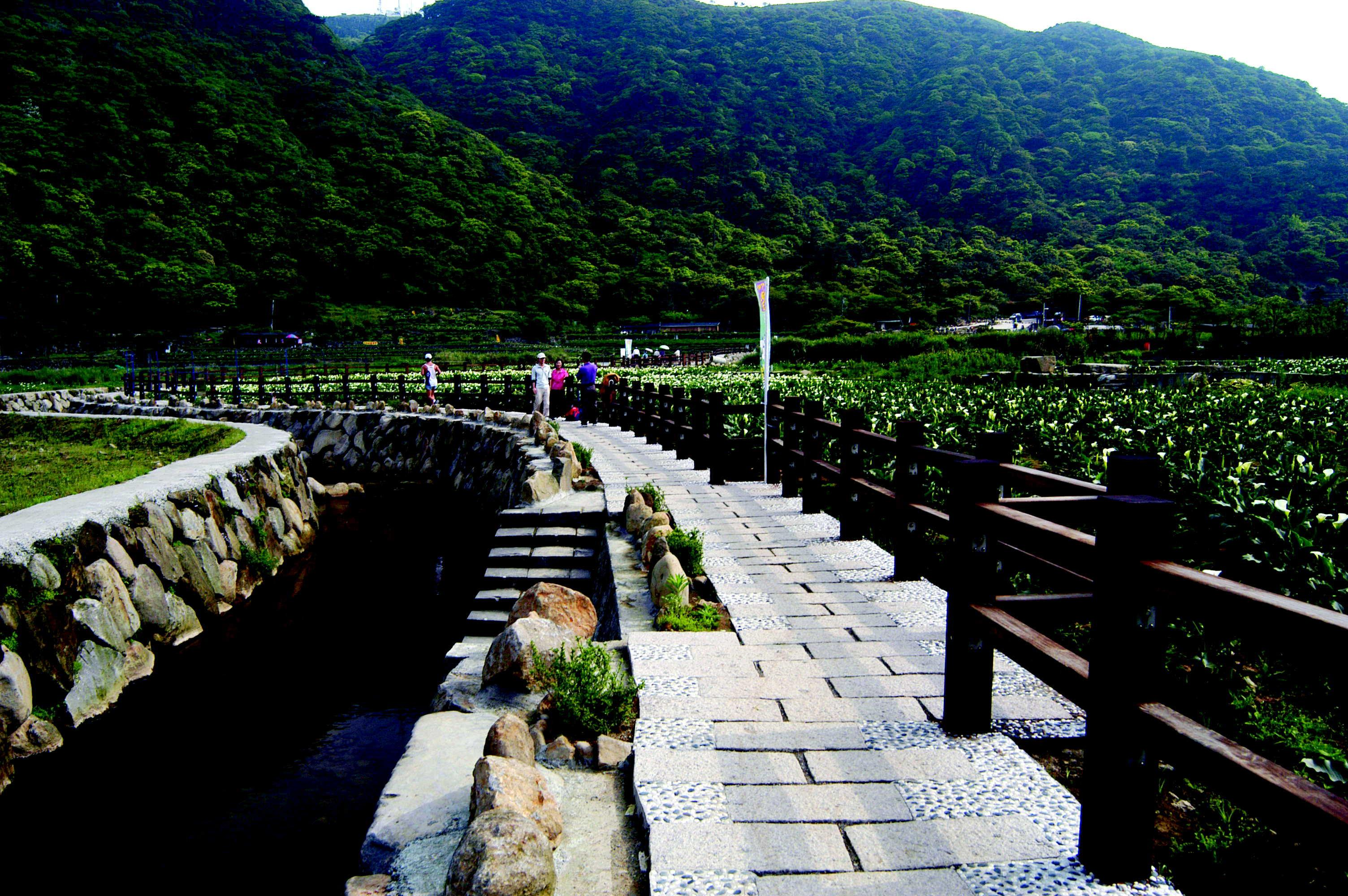 竹子湖,出自台北市政府